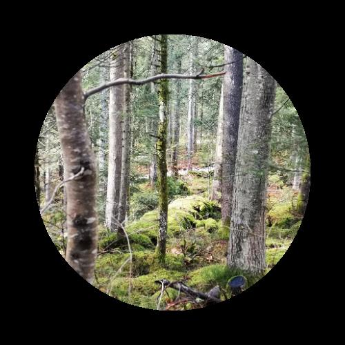 stage chamanique en forêt