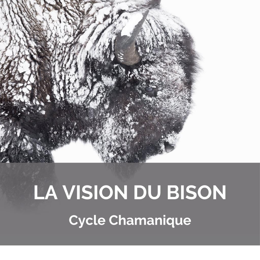 Cycle Chamanique – Vision du Bison
