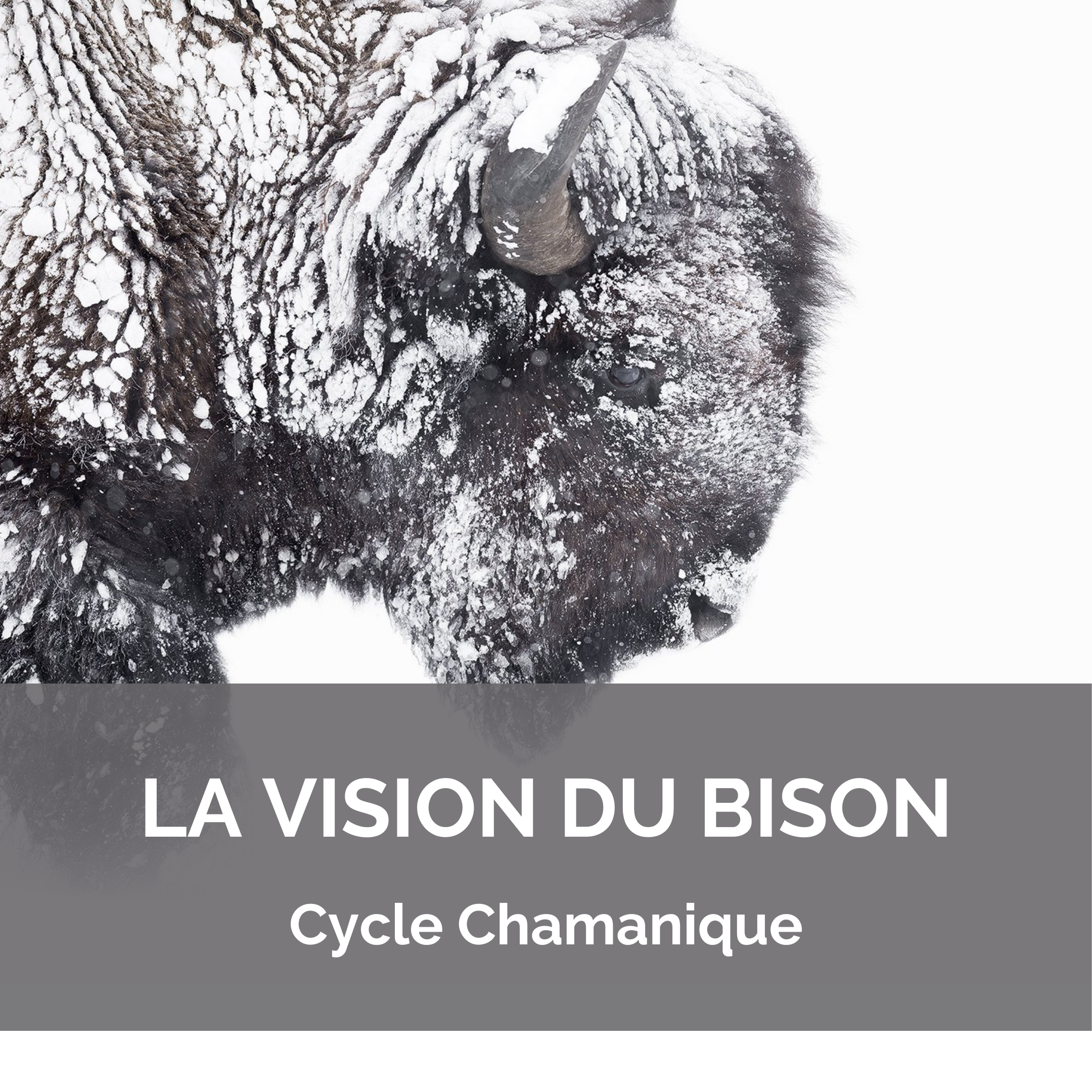 Cycle Chamanique